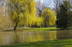 2008 03 12 Parc du Breuil (Crismo_eme) Tags: landscape nikon eau lac paysage soir arbre parc etang d300 naturelovers saule nikoniste afszoomnikkor1755f28difed