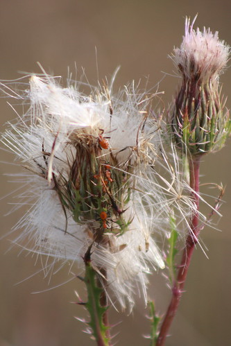 Bug haven
