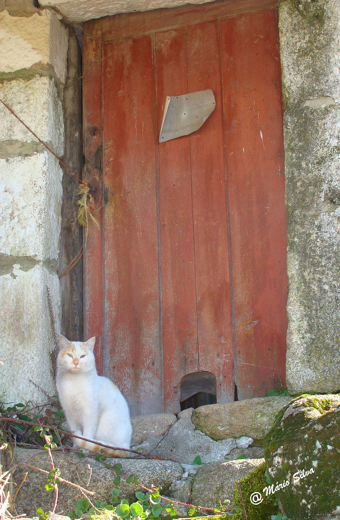Águas Frias (Chaves) - ... o gato à soleira da porta (com a sua respetiva entrada para sua serventia) ...