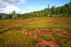fairytale meadow (schiffbruch) Tags: wood nature jasper meadow hut national lonely everglade nooneisthere