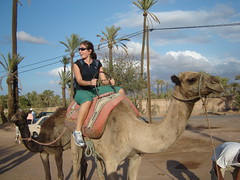 Ella Dromedario 2 (ellamiranda) Tags: camel morocco maroc marrakech mauri marruecos cosos chameau camellos ellamiranda septiembre07