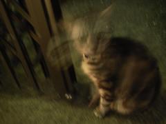 Cat looks at me