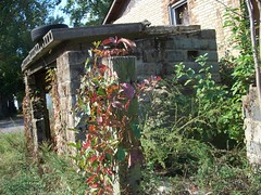 Tire On The Roof (BACKYard Woods Explorer) Tags: autumn abandoned vines tire virginiacreeper abandonedbuildings novideo