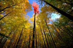 raven hill (snapstill studio) Tags: trees red color fall yellow forest michigan hike petoskey ravenhill sigma1020 superbmasterpiece ysplix