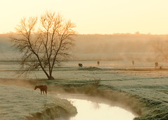 Autumn Steam (Todd Klassy) Tags: horses pasture rural steam rises creek river stream fall autumn pastel tree cow farm country yellowstone state park blanchardville argyle wisconsin wi morning sun rays mist fog cold cool yellowstonelakestatepark frost art landscape beautiful sky light artistry vision design classic outdoors stockphotography fineart royaltyfree ruralscene rurallife horsesgrazing water earlyinthemorning frosty ruralamerica yellowstoneriver lafayettecounty travel wisconsinlandscape bucolic yellow color colorimage warm preparingforwinter lifeafarm wisconsinfarm dairyfarm dairy earlymorninglight dreamlike dreamy beautyinnature mothernature rurallandscape steamrising largetree rustic easyliving