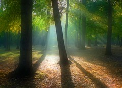 Shadowburst (Zsaj) Tags: park morning trees light sunlight woods maryland themagicwood