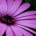 """<a href=""""http://www.flickr.com/photos/8845870@N07/1848671285/"""" mce_href=""""http://www.flickr.com/photos/8845870@N07/1848671285/"""" target=""""_blank"""">bachmont</a> via Flickr"""