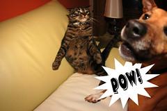 Pow! - by &y