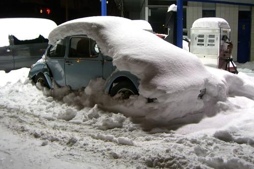 Coccinelle sous la neige...