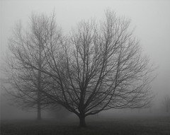 Fat and Skinny (Stanley Zimny (Thank You for 16 Million views)) Tags: trees mist rain fog for cloudy ghostly skylands thebestofday gnneniyisi