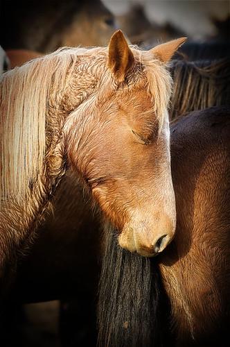 gathering mares 401