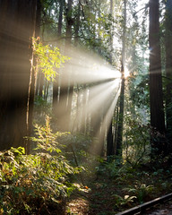 Muir Woods Morning Light (Caleb Keiter) Tags: sanfrancisco morning trees light favorite sunlight nature colors sunshine forest sunrise wow woods bravo path surreal wideangle explore muirwoods lordoftherings redwood rays thebest enchanted beamsoflight flickrexplore thebestbravo sigma1020mmf456exdchsm eos40d canon40d explorejanuary182008
