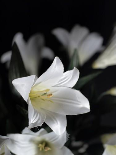 Cloth Lilies