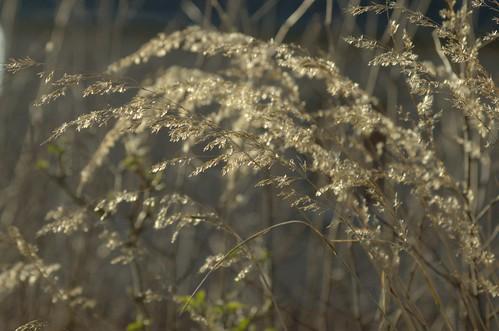 Winters gras in winters licht