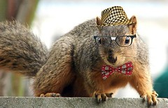 Grandpa Nerd Squirrel