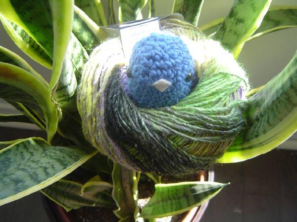 blue chickie bird's eye