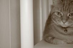 (tygress_janie) Tags: cats cute animal animals cat furry kitten feline chat fuzzy kitty gatos gato kitties gata felines katze gatto animale cutecat cutecats tier kaz katt ktzchen ket gatas cutekitten cutekittens mo libbyset