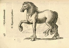 07 caballo de ocho patas