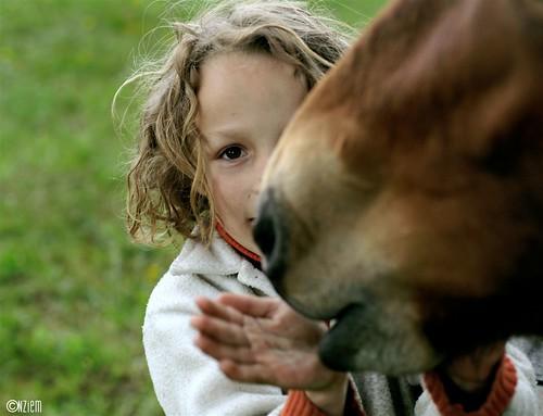 chevaux20