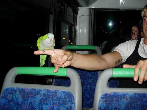 Pumuki, el lorito verde