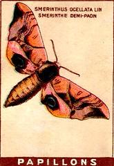 papill 18