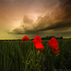 Stop By (Philippe Sainte-Laudy) Tags: flowers red sky green nature clouds landscape bravo searchthebest chapeau poppies hugs soe themoulinrouge 500x500 firstquality littlestories nikond200 avision superaplus aplusphoto flickrplatinum infinestyle goldenphotographer diamondclassphotographer flickrdiamond megashot theunforgettablepictures philippesaintelaudy theperfectphotographer thegardenofzen theroadtoheaven tup2 world100f exploreheaven picswithsoul multimegashot alemdagqualityonlyclub mondocafeclub winner500 obq jadorebisous perfectbisousxxxx jediphotographer grandoracle