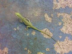 Gecko_by_Sheila_Cunningham