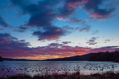 Sunrise and Geese (snooker2009) Tags: birds geese swans migration winter spring fall nature wildlife pennsylvania