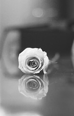 [       ] (Aih.) Tags: bw flower macro reflection rose table 50mm bokeh roze blure