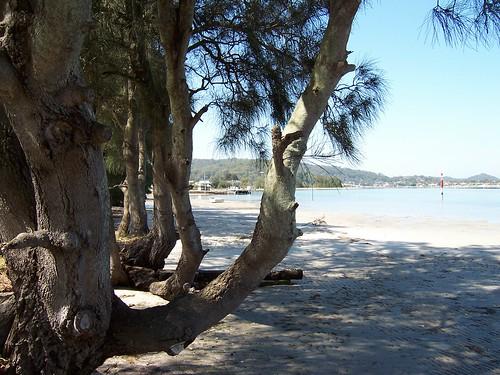 Illoura Reserve & St Huberts Island from Pyang Avenue Davistown
