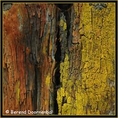 """poteau en bois (""""berend"""") Tags: jaune rouge photography fotografie photographie bois vieux pourri berend cantal seriecouleursdelacorrèze berendblogspotdia berenddoornenbal berenddoornenbalphotographie"""