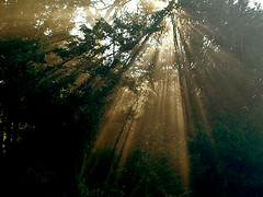 Lights  in the Forest (algo) Tags: autumn trees light england photography topf50 topv333 topv1111 chilterns topv999 rays algo topf100 sunbeams 100f naturesfinest blueribbonwinner chilternforest 50f 10faves 71210 200750plusfaves theunforgettablepictures searchthebestnew