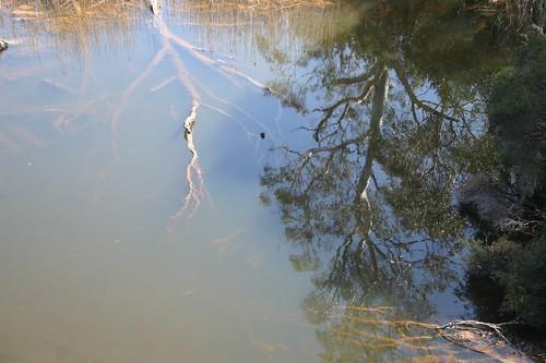 Tasmanian creek...