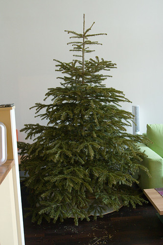 X-Mas tree without decoration