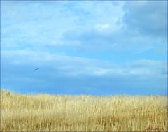 Texas Grasslands (Blue Eyes and Bluebonnets) Tags: statepark austin gallery texas mckinney mckinneyfalls stateparks texasstatepark mckinneyfallsstatepark nearaustin