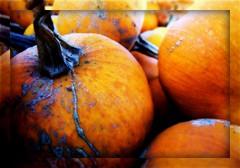 Pumpkins in Autumn (mightyquinninwky) Tags: autumn orange fall catchycolors pumpkin october catchycolours kentucky harvest gourd karma onwhite picnik 1on1 onblack smrgsbord westernkentucky ohiorivervalley autumnfall 1on1objects viewonblack ~elegance~ allsizesavailable ilovemypic onlythebestare hendersoncountykentucky autumnandwinter2007 autumnfallcolorsandthemes bestofautumnandwinter2007 viewonwhite bokehforthecommonfolk coloursintheworld sunriseandsunsetsallovertheworld