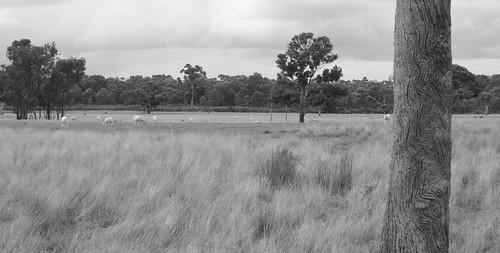 Rural Australia. Victoria.