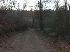 Un nuevo camino (anxela.ma) Tags: lugo mio pataca