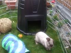 Compost bin for shelter - clever Miss Emma (allatseawithabucketandspade) Tags: rabbit bunny garden toys bessie bunter compostbin rabbitrun