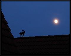 Die Katze auf dem heißen Blechdach - Cat on a Hot Tin Roof