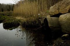 IMG_0170 copy (ryanrichardson) Tags: scenic rop wareham tidalflat