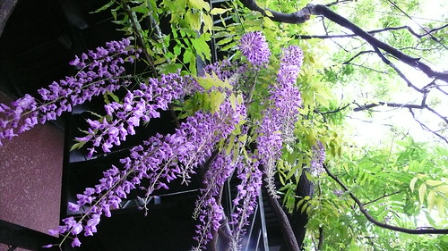 Fuji flowers 04