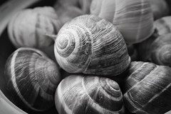 Snail shells (JulieK (ready for another 365 challenge)) Tags: hmm macromondays monochrome bw canoneos100d snail shell escargot texture indoor 2017onephotoeachday