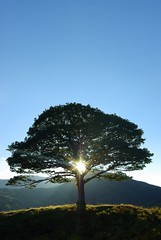 sparkle tree (alternativefocus) Tags: sunset tree pentax lakedistrict bluesky sparkle cumbria lakeland pentaxk10d platinumphoto frhwofavs alternativefocus