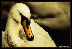 cisne (jmrufian) Tags: uk bridge blue trees winter light sunset red sea summer sky bw panorama cloud sun mist mountain lake holiday snow mountains reflection tree skye green castle beach nature water clouds forest sunrise canon reflections landscape geotagged boats lago island scotland boat duck highlands fishing nikon scenery rocks edinburgh view ben argyll hill perthshire scottish calm glen hills highland pato glencoe loch lomond edimburgo trossachs hdr lochlomond cisne lochness ness cairngorms rannoch naturesfinest abigfave