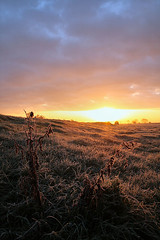 Frost on Butleigh Moor in October (torimages) Tags: uk autumn sunrise frost glastonbury atmosphere somerset frosty autumncolours sd allrightsreserved somersetlevels butleighmoor donotusewithoutwrittenconsent copyrighttorimages