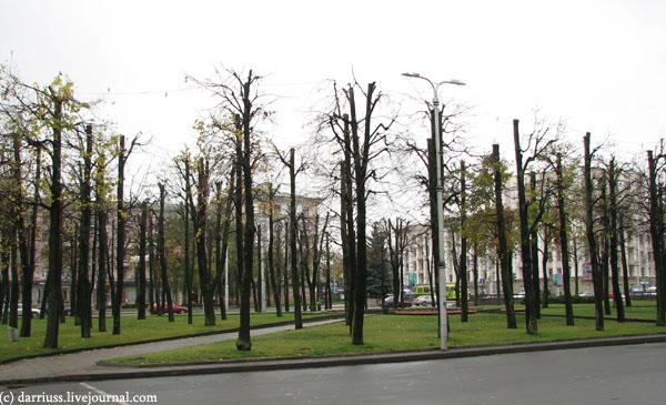 mogilev_trees