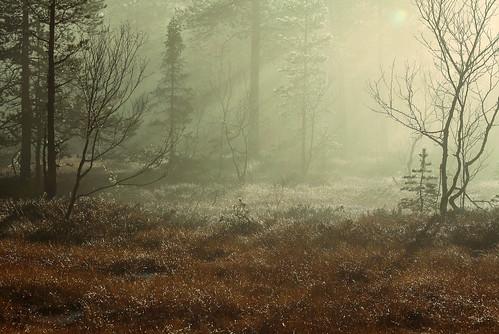 Trollskogen by balsamia.