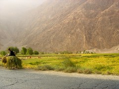 On Donkey (From Afghanistan With Love) Tags: world travel afghanistan tourism digital canon rebel kiss roads development zeerak xti safrang hamesha javaid samangan