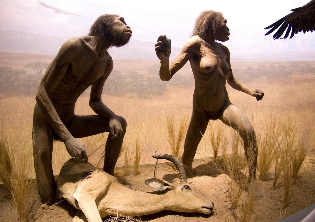 American Museum Of Natural History Amnh